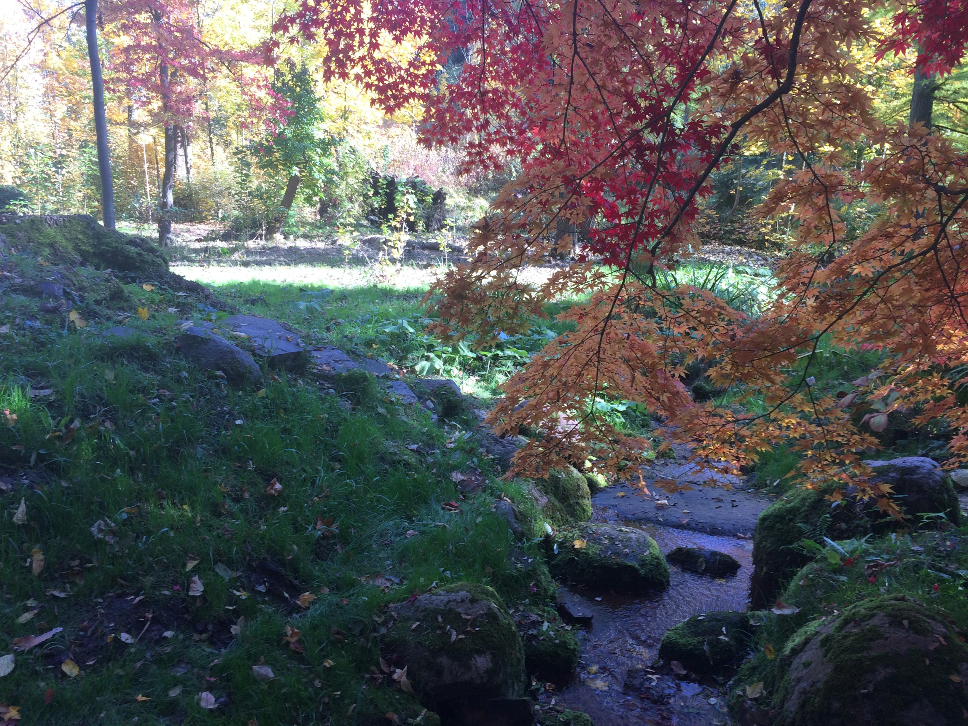 Botaniczna Piątka - edycja jesienna wirtu@lna